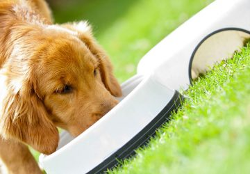 Purchasing Dog Food Online to Save Money