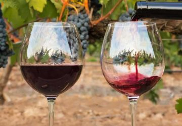 The Hidden Perks Of Hiring The Best Tours and Winery Services!