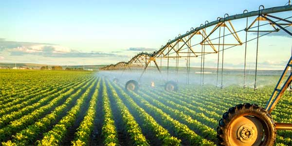 What Is the Main Role of Irrigation